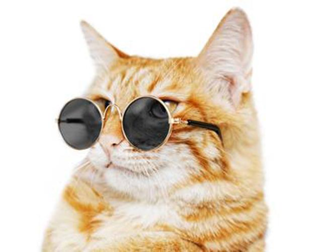 961183217d73 Kitty Hippie Sunglasses
