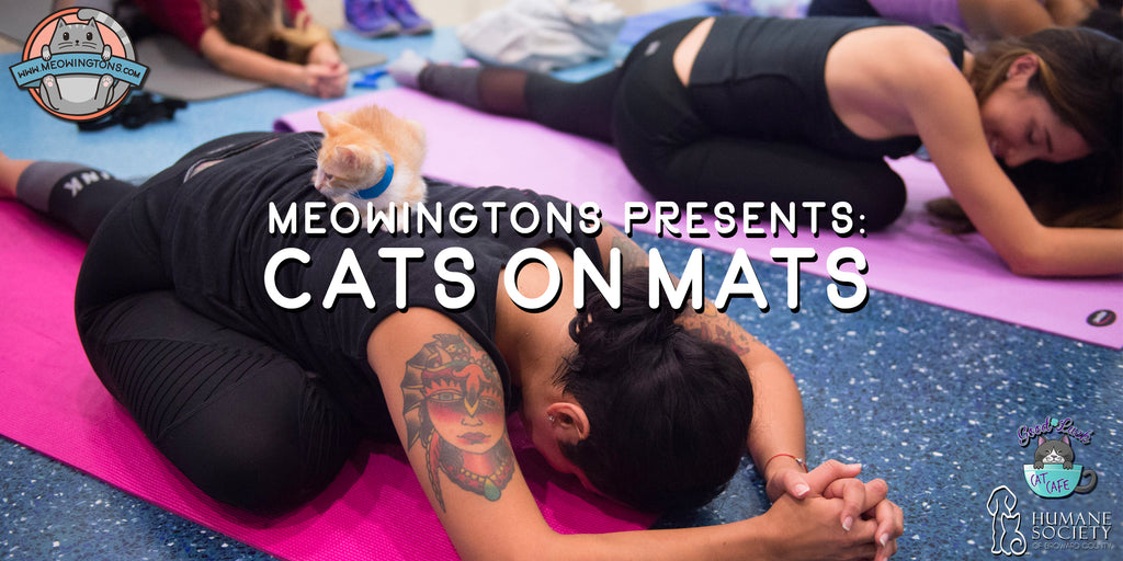 Meowingtons Presents: Cats on Mats E-Ticket