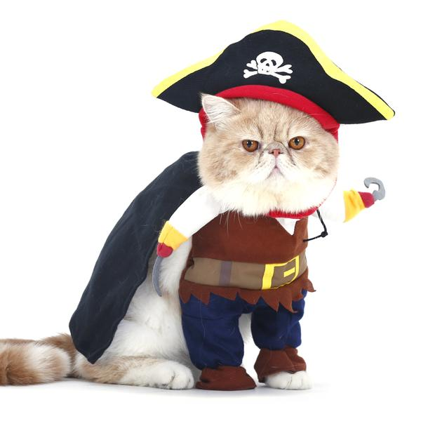 dress up your cat for halloween