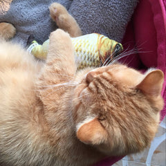 Fish Kicker Cat Toy