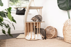 Jungle Gym Cat Tree Condo