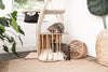 meowingtons jungle gym cat tree condo
