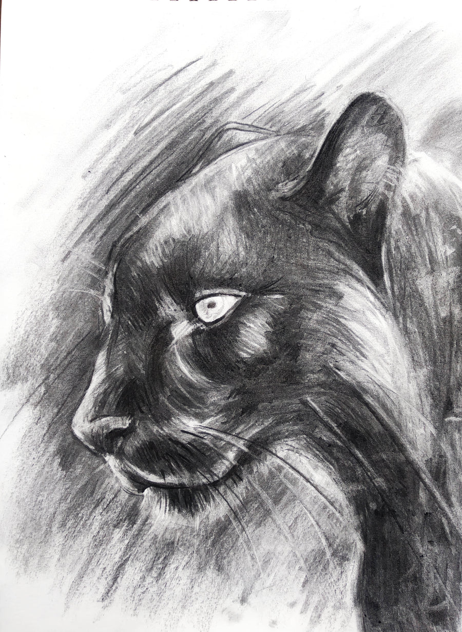 ORANGE - Charcoal Panther Friday 9th April 2021 6pm