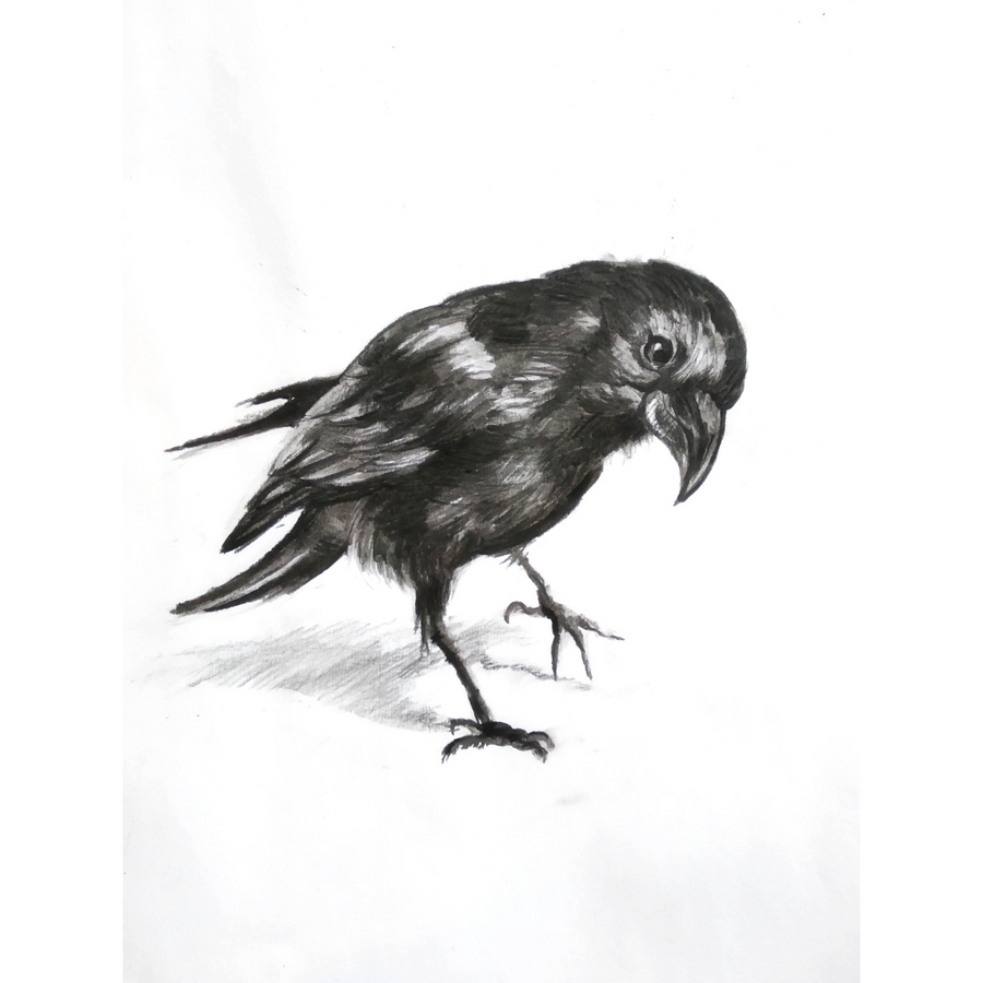 'Charcoal Raven' DIY Drawing Kit