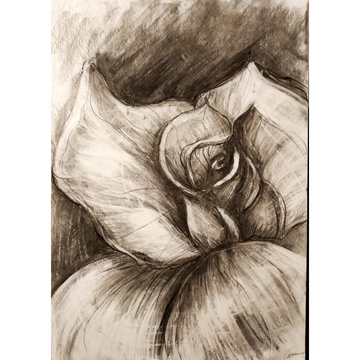 'Charcoal Rose' DIY Drawing Kit