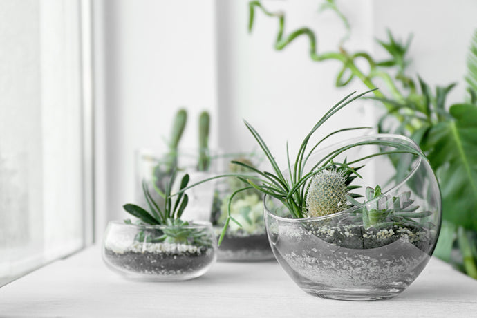 Are Terrariums Worth Gifting?