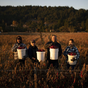 Farmers from the Boonville Barn Collective in a Field holding buckets of chiles during harvest