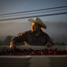 Load image into Gallery viewer, Nacho Flores, farmer for the Boonville Barn Collective, with a hand in a tub of chiles