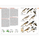 The Australian Bird Guide: Princeton Field Guide