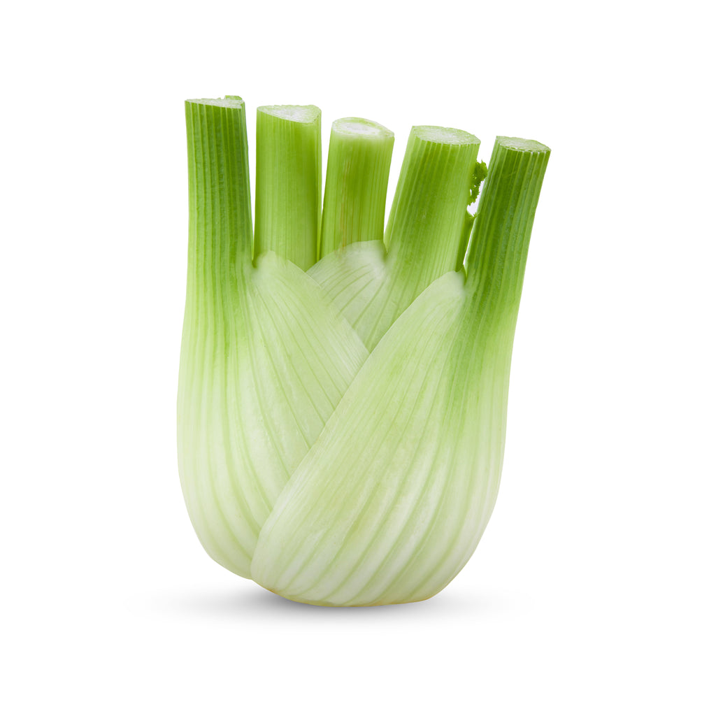 Fennel 1pc