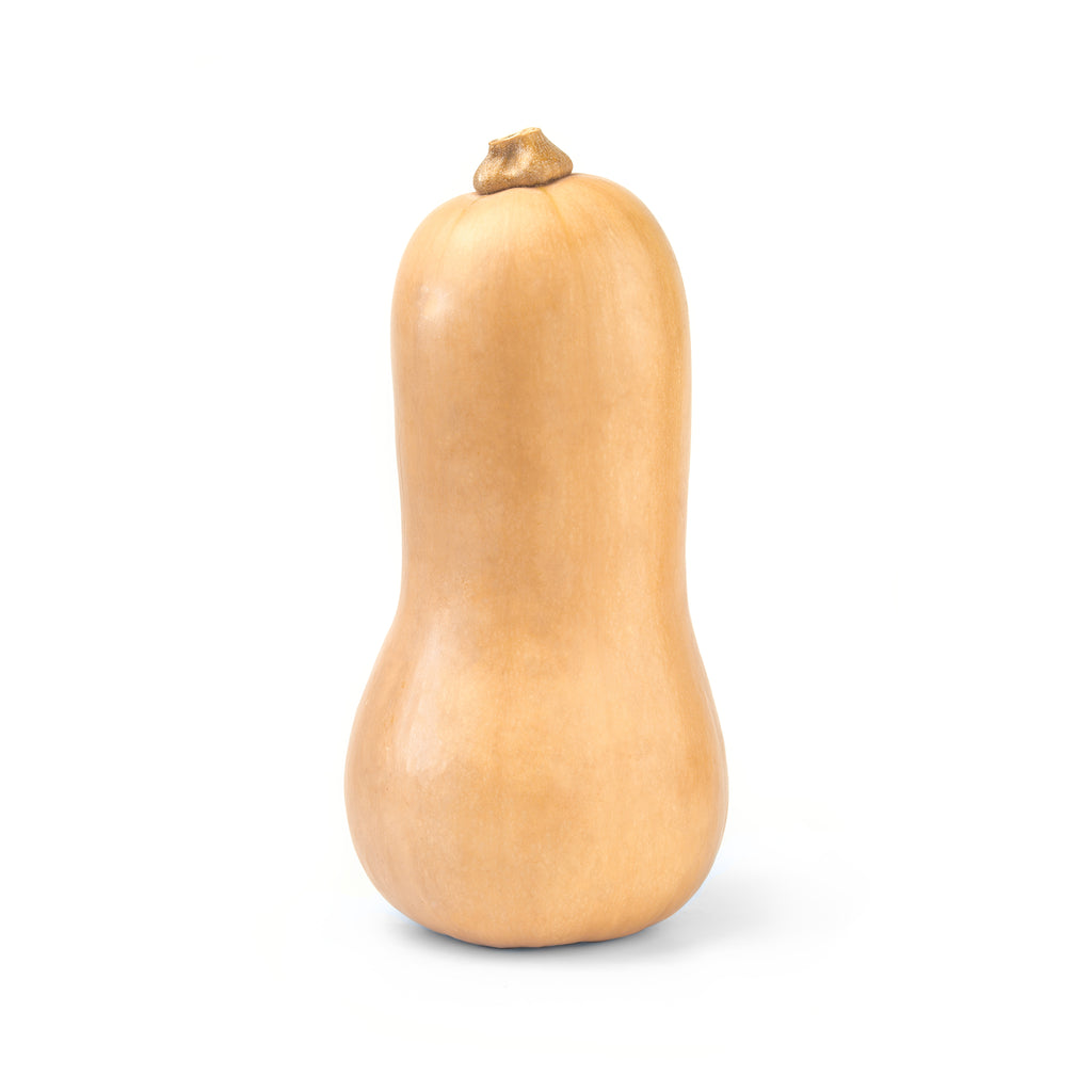 Butternut Squash 1 pc