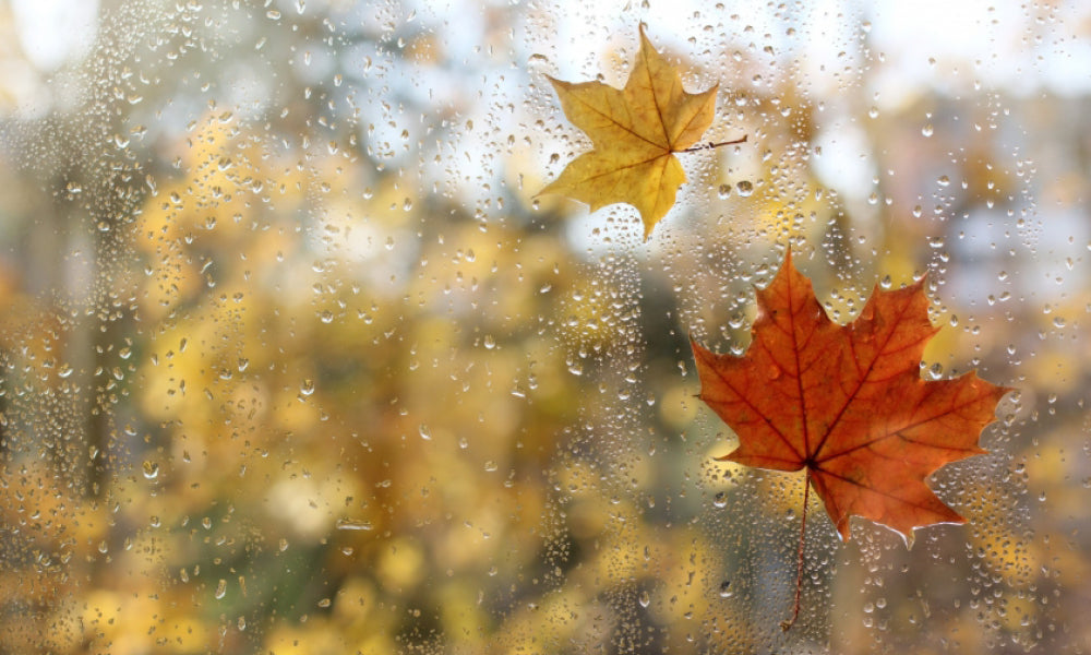 How to Bring the Scent of Autumn into your Home