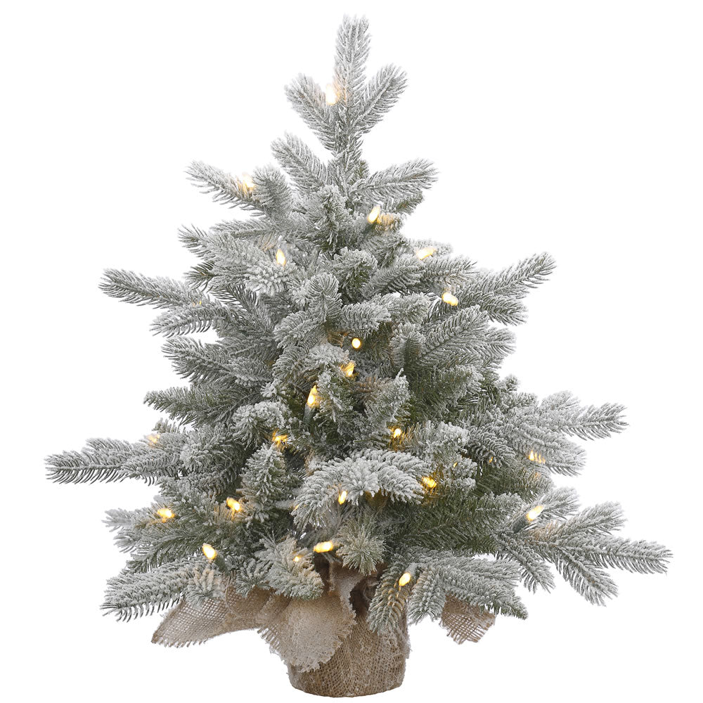 24in. Frosted Sable Pine tree 106 frosted PE/PVC tips 50 warm white LED lights