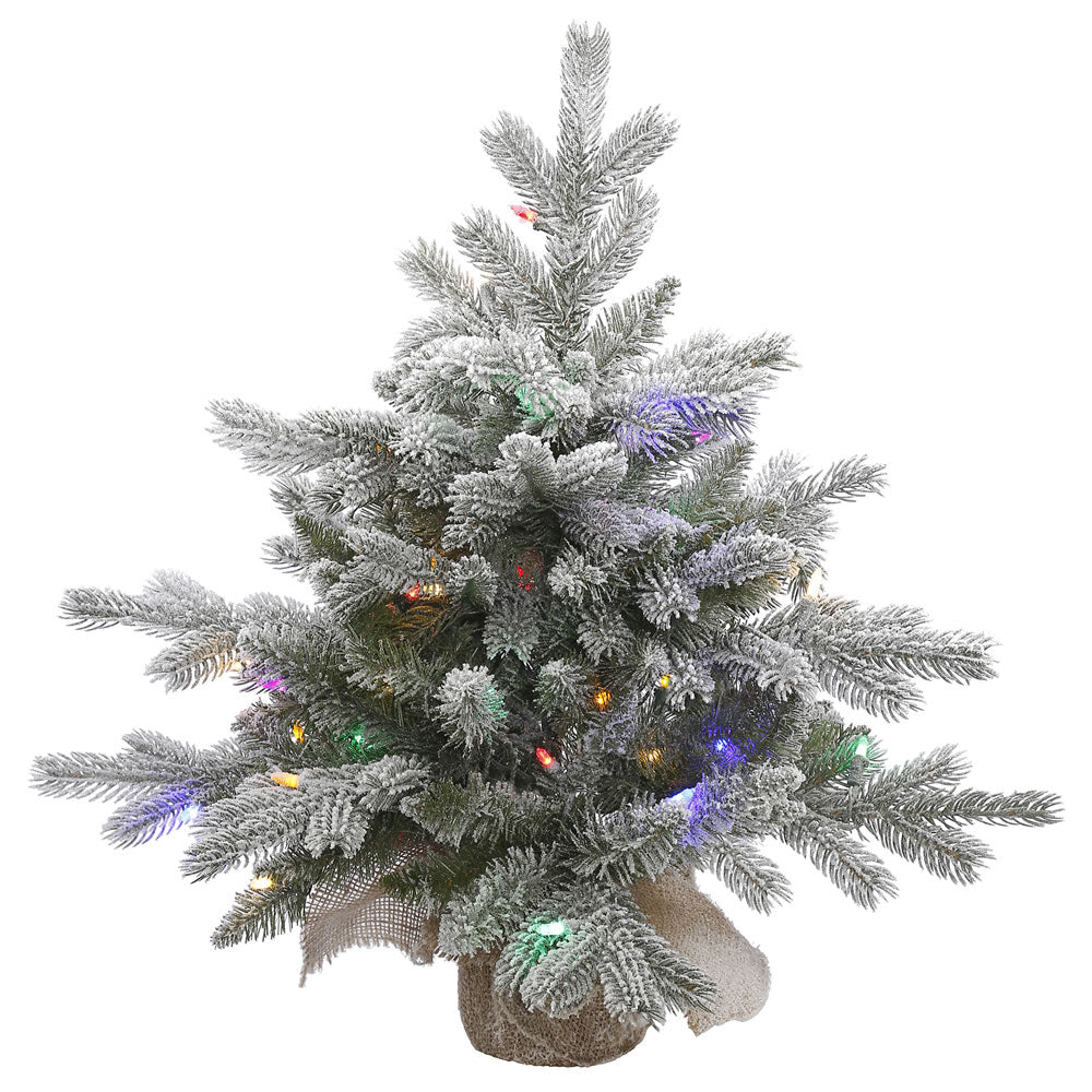 24in. Frosted Sable Pine tree 106 frosted PE/PVC tips 50 multi LED lights