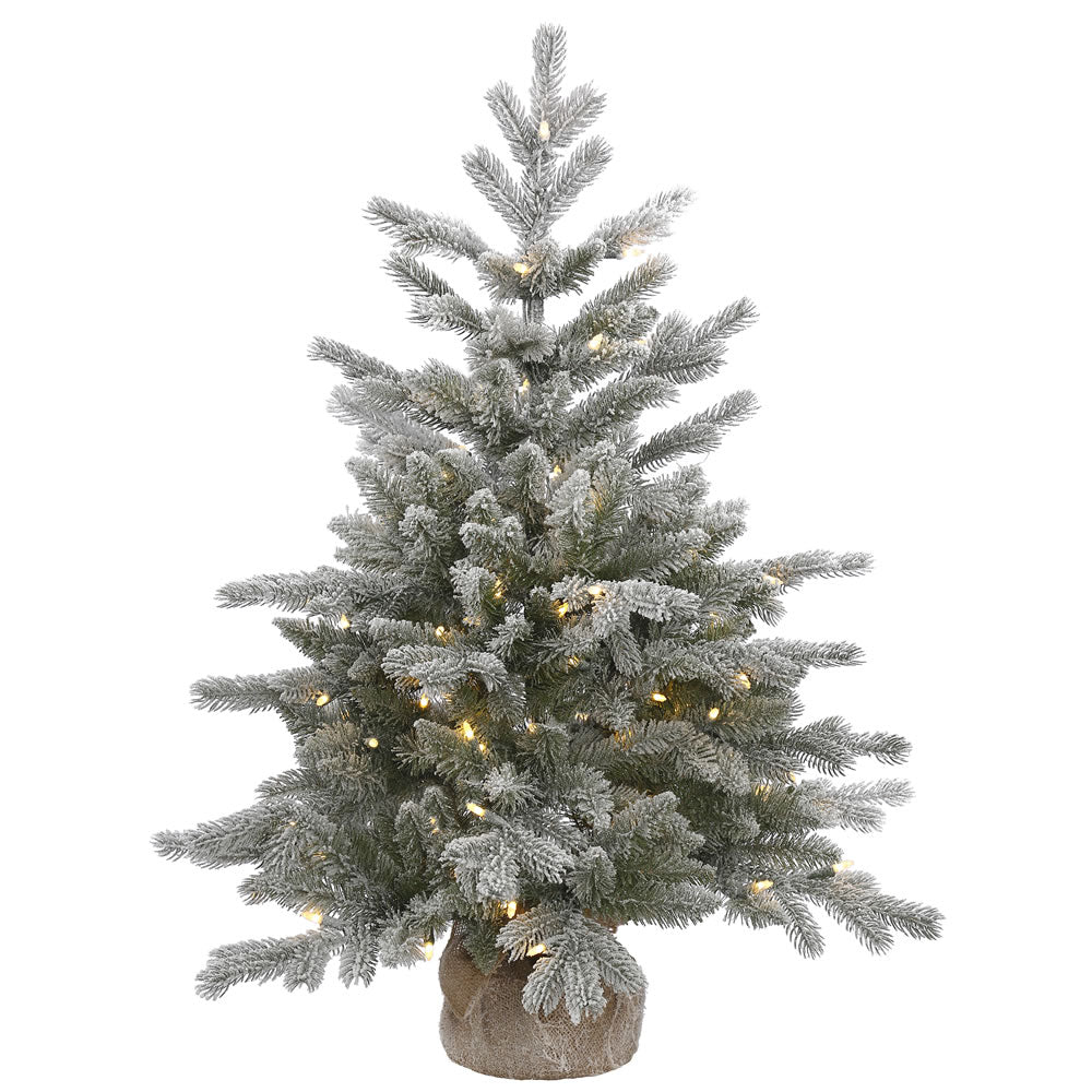 36in. Frosted Sable Pine tree 206 frosted PE/PVC tips 100 warm white LED lights