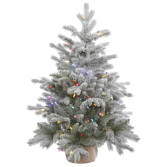 36in. Frosted Sable Pine tree 206 frosted PE/PVC tips 100 multi LED lights