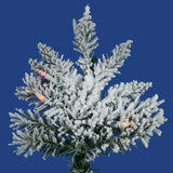 Vickerman - A895092 - BulbAmerica