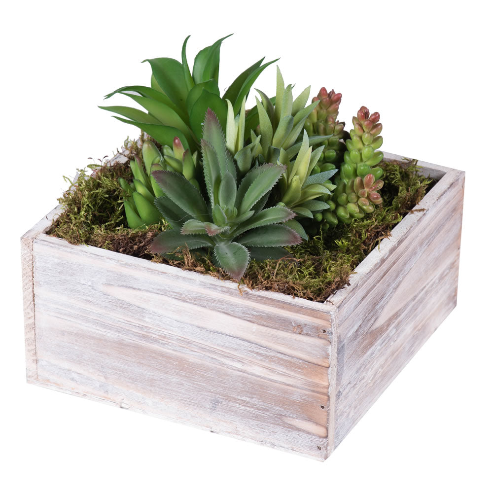 "Succulent Variety Plants Arrangement in 7"" Square White Woodland Planter"