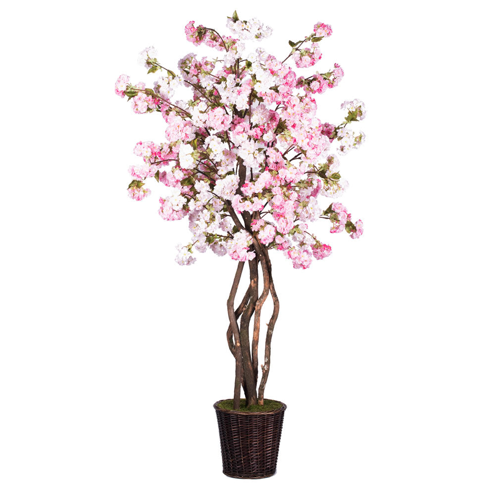 7Ft. Pink Cherry Blossom Deluxe real Tag Alder trunks
