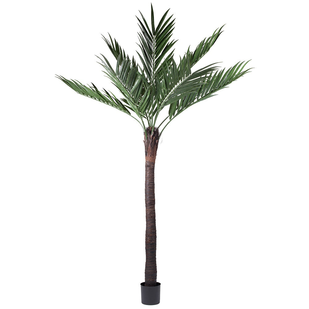 Vickerman 12' UV Resistant Kentia Palm 9 Fronds w/ 474 Leaves Natural Coco Trunk