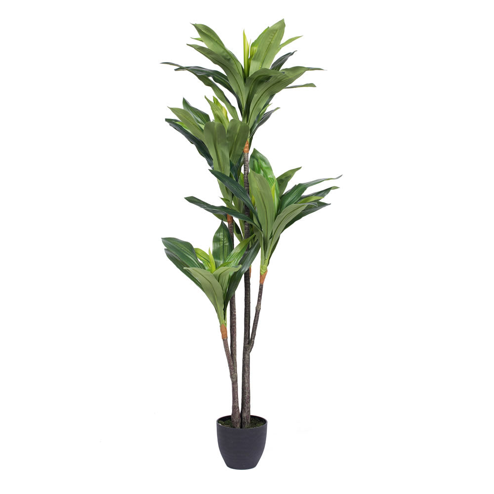 "Vickerman 60"" Artificial Real Touch Dracaena Silk Poly 5 Branch Pots 68 Leaves"