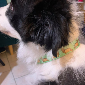 Wiz-Pups Pet Collar