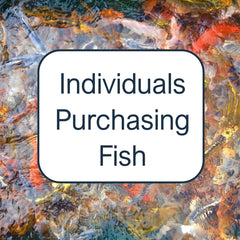 Individuals purchasing fish