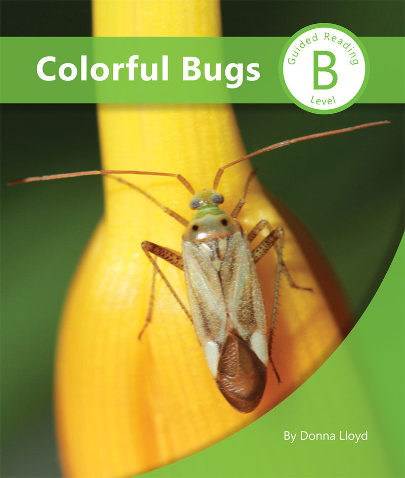 Colorful Bugs (SC204009)