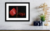 Red Flower Photo Print
