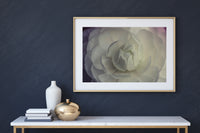 White Flower Photo Print