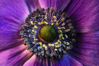 Purple Flower Photo Print