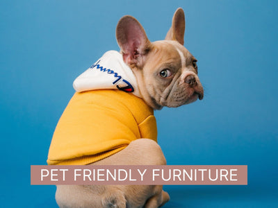 How to Choose Pet-Friendly Furniture for your Home