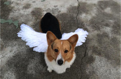 Angel Wings For Pets
