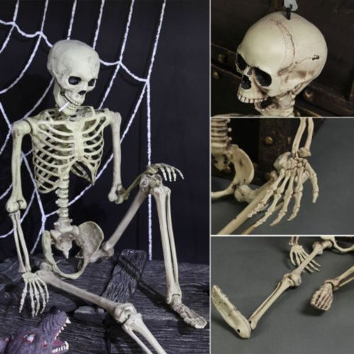 1Pcs Halloween Prop Human Skeleton