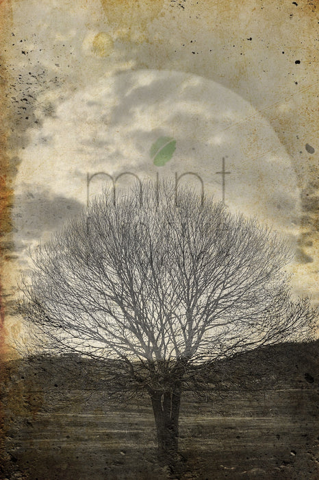 "Mint by Michelle ""Sepia Tree"""