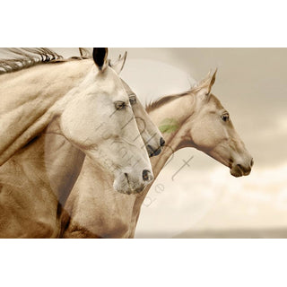 "Mint by Michelle ""Sepia Horses"""