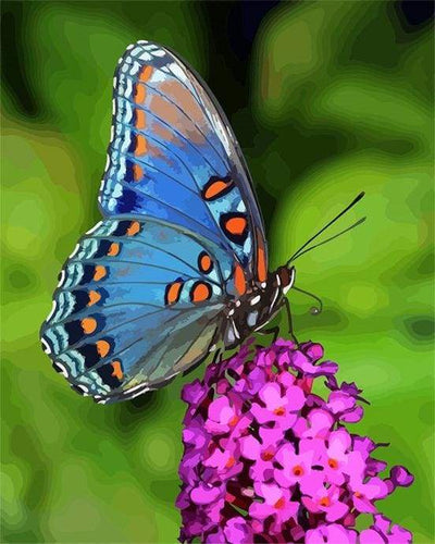 paint by numbers | Butterfly Flowers | animals butterflies flowers intermediate | FiguredArt