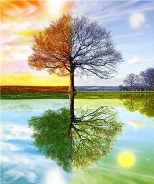 Diamond Painting | Diamond Painting - 4 Seasons Tree 2 | Diamond Painting Landscapes landscapes trees | FiguredArt