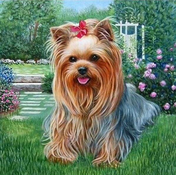Diamond Painting | Diamond Painting - Bichon Maltese Dog | animals Diamond Painting Animals dogs | FiguredArt