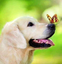 Load image into Gallery viewer, Diamond Painting | Diamond Painting - Butterfly and Labrador | animals butterflies Diamond Painting Animals | FiguredArt