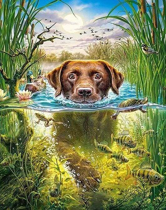 Diamond Painting | Diamond Painting - Dog in the stream | animals Diamond Painting Animals dogs | FiguredArt