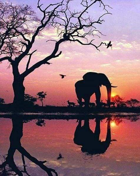 Diamond Painting | Diamond Painting - Elephant and Sunset Sun | animals Diamond Painting Animals elephants | FiguredArt
