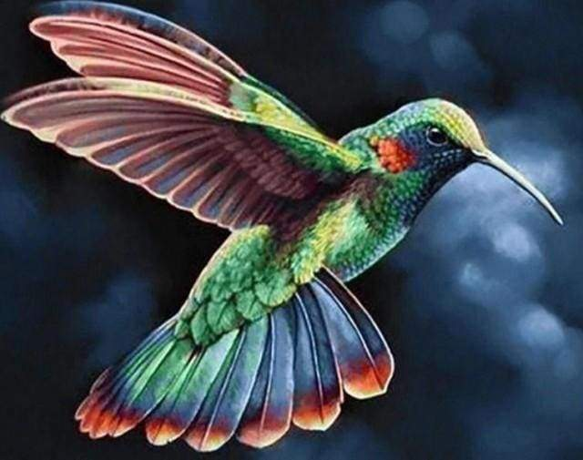 Diamond Painting | Diamond Painting - Hummingbird in the Night | animals Diamond Painting Animals | FiguredArt