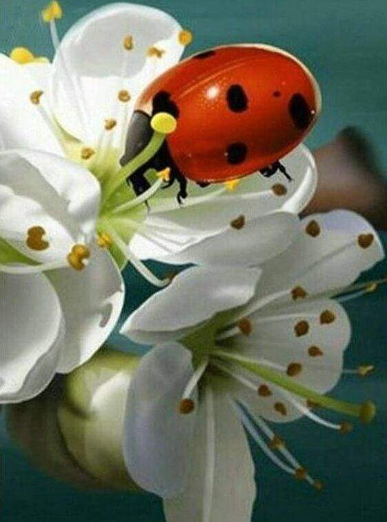 Diamond Painting | Diamond Painting - Ladybug and Flowers | animals Diamond Painting Animals flowers | FiguredArt