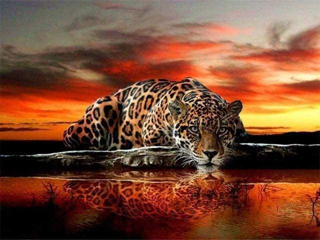 Diamond Painting | Diamond Painting - Leopard | animals Diamond Painting Animals leopards | FiguredArt