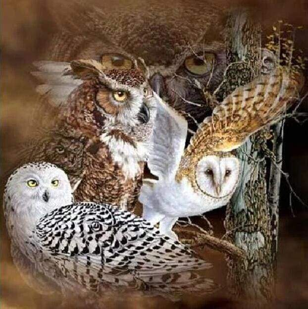 Diamond Painting | Diamond Painting - Owls | animals Diamond Painting Animals owls | FiguredArt