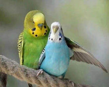 Load image into Gallery viewer, Diamond Painting | Diamond Painting - Parakeets | animals Diamond Painting Animals | FiguredArt