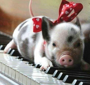 Diamond Painting | Diamond Painting - Pig and Piano | animals Diamond Painting Animals | FiguredArt