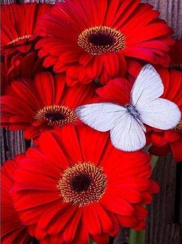 Diamond Painting | Diamond Painting - Red Daisies and White Butterfly | animals butterflies Diamond Painting Animals Diamond Painting