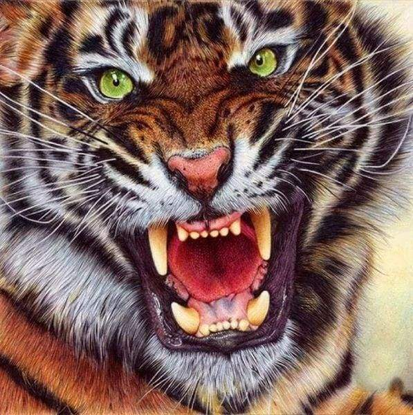 Diamond Painting | Diamond Painting - Tiger Teeth | animals Diamond Painting Animals tigers | FiguredArt